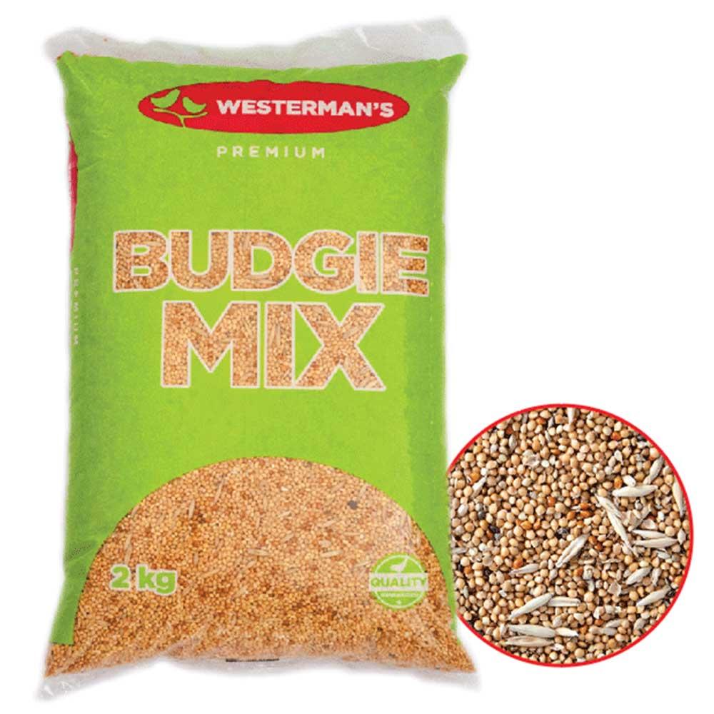 Westerman's Budgie Mix