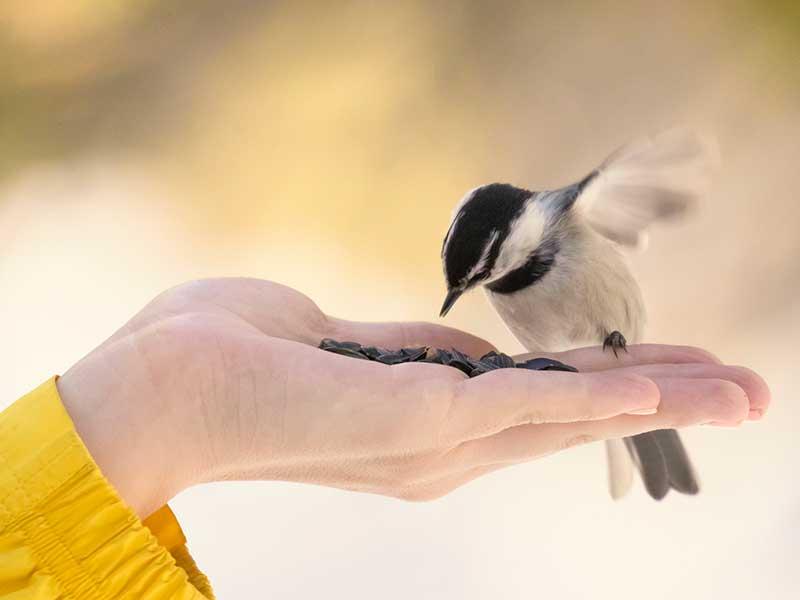 bird-food