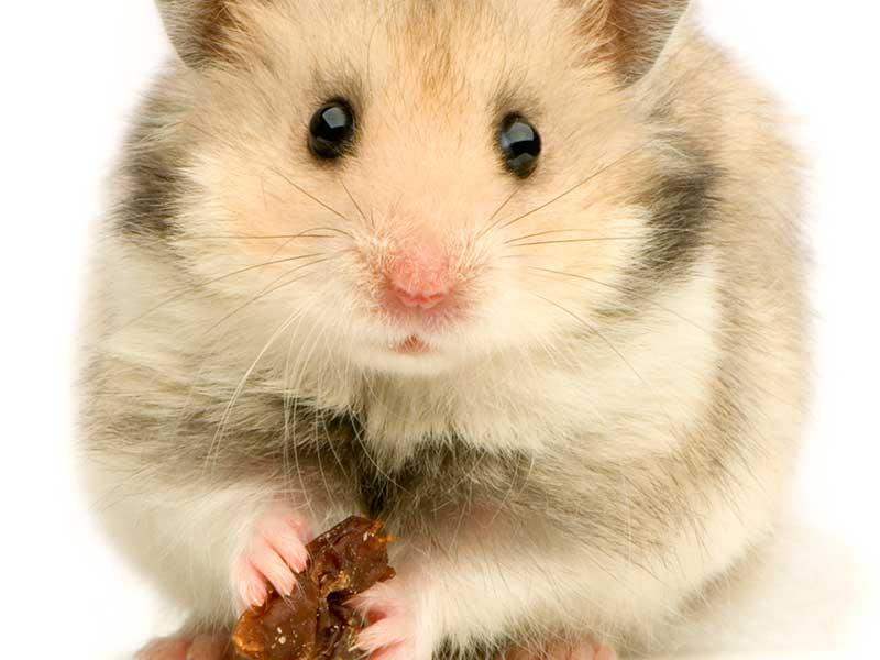small-animal-food